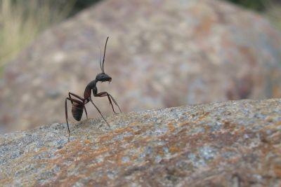Türdichtungen gegen Insekten